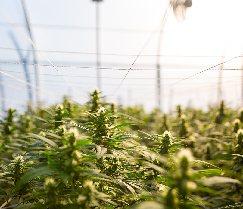marijuana grow facility