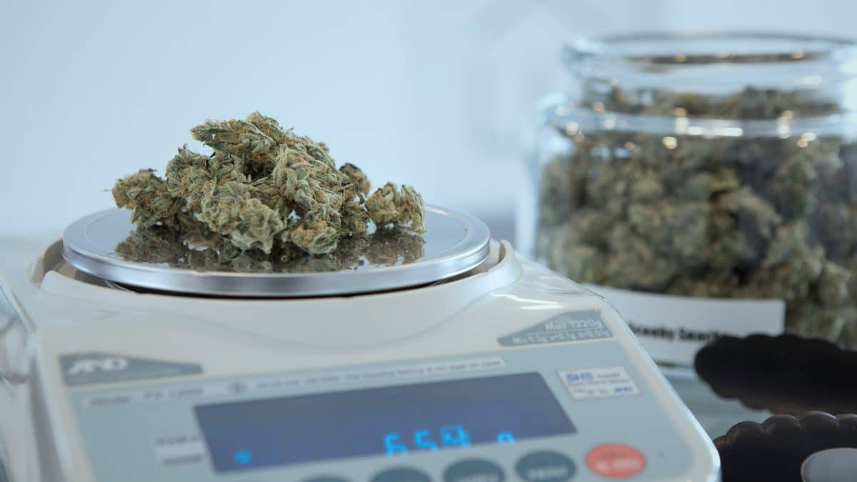 Leading businesses in cannabis industry